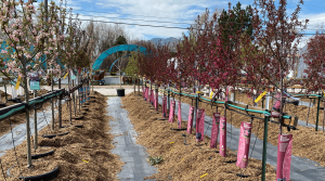 Image of trees at Rick's Garden Center